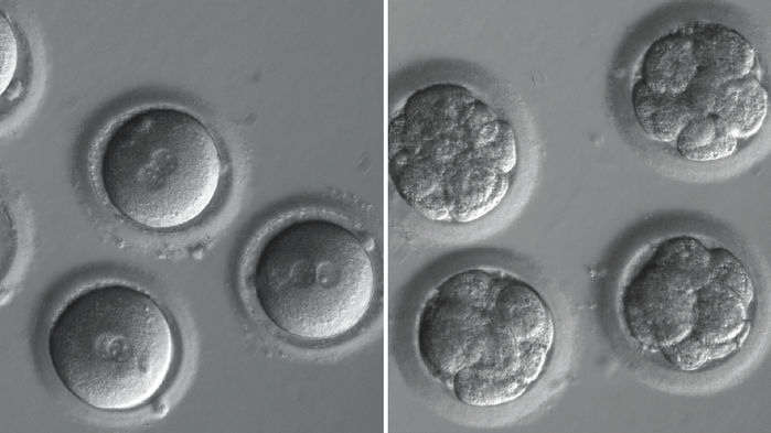 embryo-main