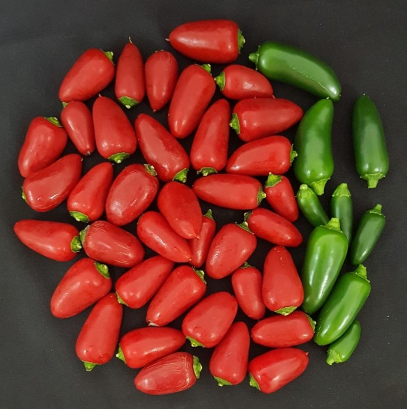 this image shows jalapeño peppers (a cultivated variety of capsicum annuum) credit emmanuel rezende naves